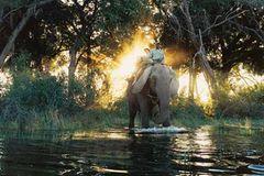 Botswana: Die Schule der Elefanten - Bild 2