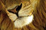 Fotogalerie: Der Zauber von Afrika