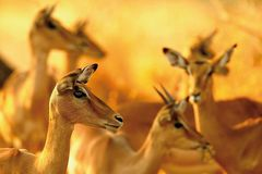 Fotogalerie: Der Zauber von Afrika - Bild 3