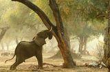Fotogalerie: Der Zauber von Afrika - Bild 8