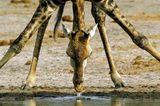 Fotogalerie: Der Zauber von Afrika - Bild 11