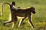 Fotogalerie: Der Zauber von Afrika - Bild 12