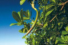 Fotogalerie: Mangroven