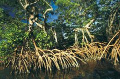 Fotogalerie: Mangroven - Bild 2