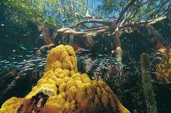 Fotogalerie: Mangroven - Bild 3