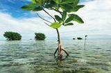 Fotogalerie: Mangroven - Bild 5