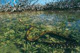 Fotogalerie: Mangroven - Bild 9