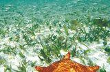 Fotogalerie: Mangroven - Bild 10