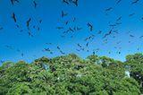 Fotogalerie: Mangroven - Bild 11