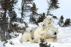Tierfotograf Milse: Eisbären, Tiger & Co.