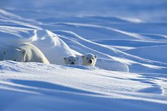 Tierfotograf Milse: Eisbären, Tiger & Co. - Bild 3
