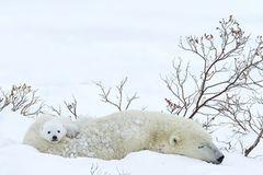 Tierfotograf Milse: Eisbären, Tiger & Co. - Bild 4