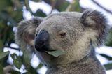 Tierfotograf Milse: Eisbären, Tiger & Co. - Bild 9