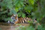 Tierfotograf Milse: Eisbären, Tiger & Co. - Bild 10