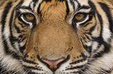 Tierfotograf Milse: Eisbären, Tiger & Co. - Bild 11