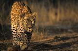 Tierfotograf Milse: Eisbären, Tiger & Co. - Bild 12