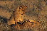 Tierfotograf Milse: Eisbären, Tiger & Co. - Bild 13
