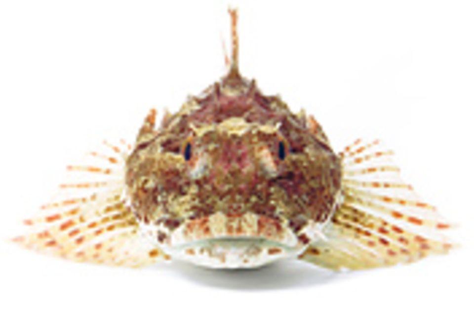 Fotogalerie: Kreaturen der Nordsee