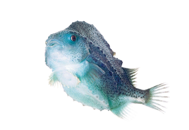 Fotogalerie: Kreaturen der Nordsee - Bild 10