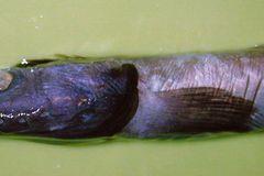 Fotoshow: Kreaturen der Tiefsee - Bild 3