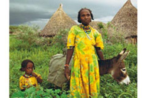 Eritrea: Esel für die Ärmsten