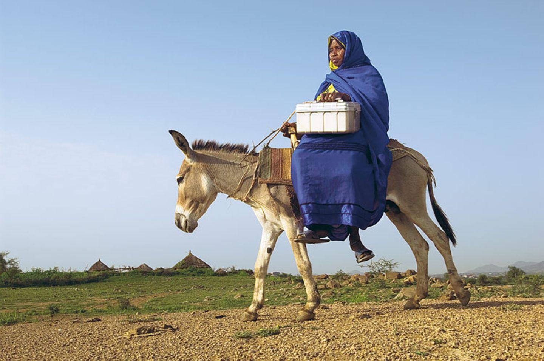Eritrea: Esel für die Ärmsten - Bild 2