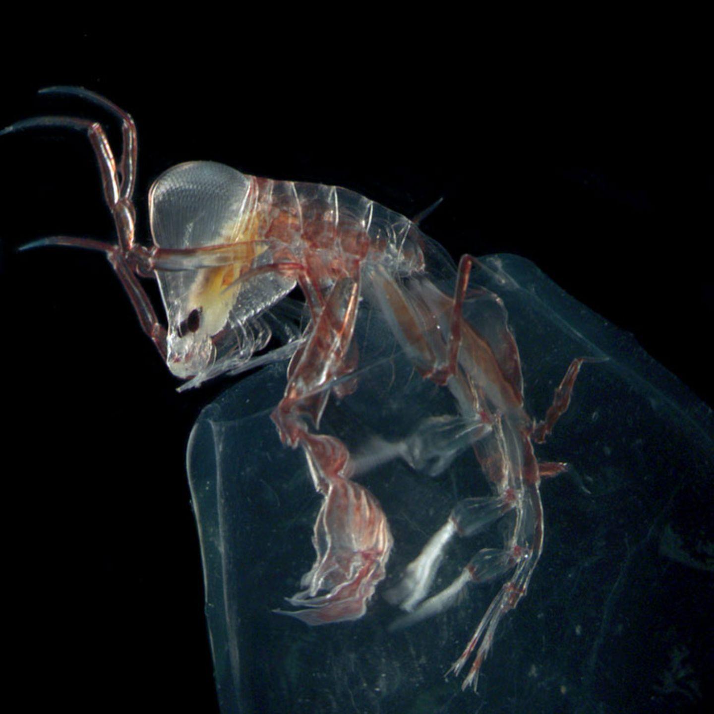Fotoshow: Kreaturen der Tiefsee - Bild 2