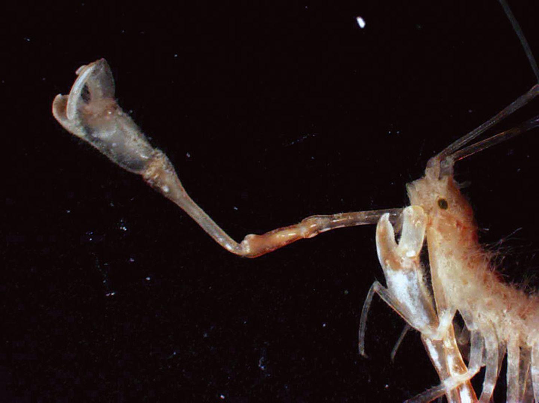 Fotoshow: Kreaturen der Tiefsee - Bild 5