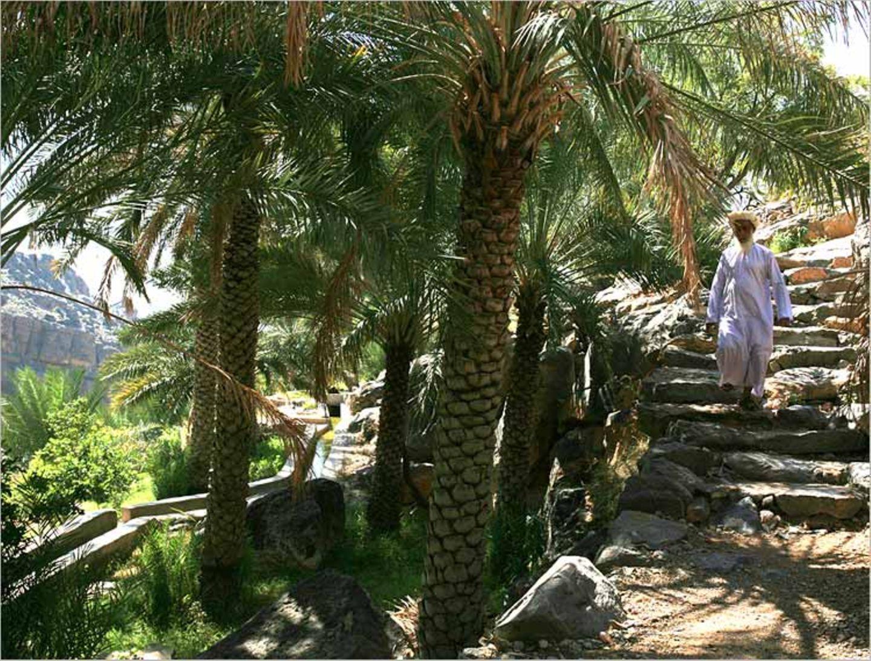 Fotogalerie: Oman - Bild 4
