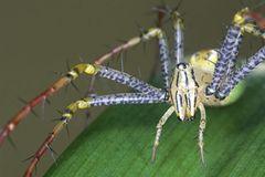 Spinnen: Faszinierende Krabbelviecher - Bild 2