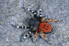 Spinnen: Faszinierende Krabbelviecher - Bild 3