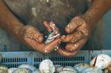 Fotogalerie: Die Sprache der Hände - Bild 9