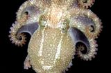 Fotoshow: Kraken - Bild 8