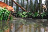 Dinosaurier - Erfolgsmodelle der Evolution - Bild 2