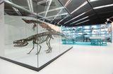 Dinosaurier - Erfolgsmodelle der Evolution - Bild 13