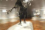 Dinosaurier - Erfolgsmodelle der Evolution - Bild 15