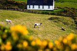 Fotogalerie zum Cover-Wettbewerb: Irland - Bild 2