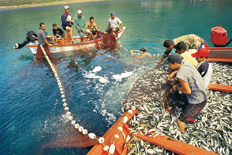 Welchen Fisch darf man noch essen? - Bild 6
