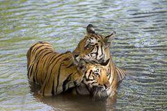 Fotogalerie: Tierkinder - Bild 3
