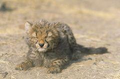 Fotogalerie: Tierkinder - Bild 4
