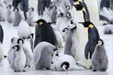 Fotogalerie: Tierkinder - Bild 14