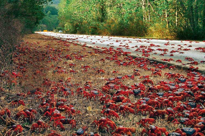 GEO TV: Der Marathon der Krabben - Bild 4