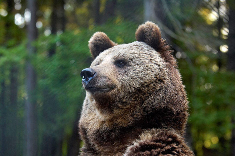 Fotoshow: Unterschlupf für Braunbären