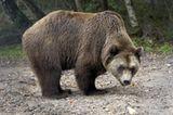 Fotoshow: Unterschlupf für Braunbären - Bild 2