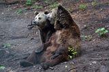 Fotoshow: Unterschlupf für Braunbären - Bild 3
