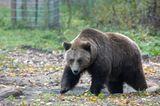 Fotoshow: Unterschlupf für Braunbären - Bild 4
