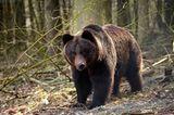 Fotoshow: Unterschlupf für Braunbären - Bild 5