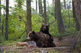 Fotoshow: Unterschlupf für Braunbären - Bild 6