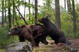 Fotoshow: Unterschlupf für Braunbären - Bild 7