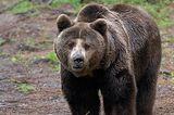 Fotoshow: Unterschlupf für Braunbären - Bild 8